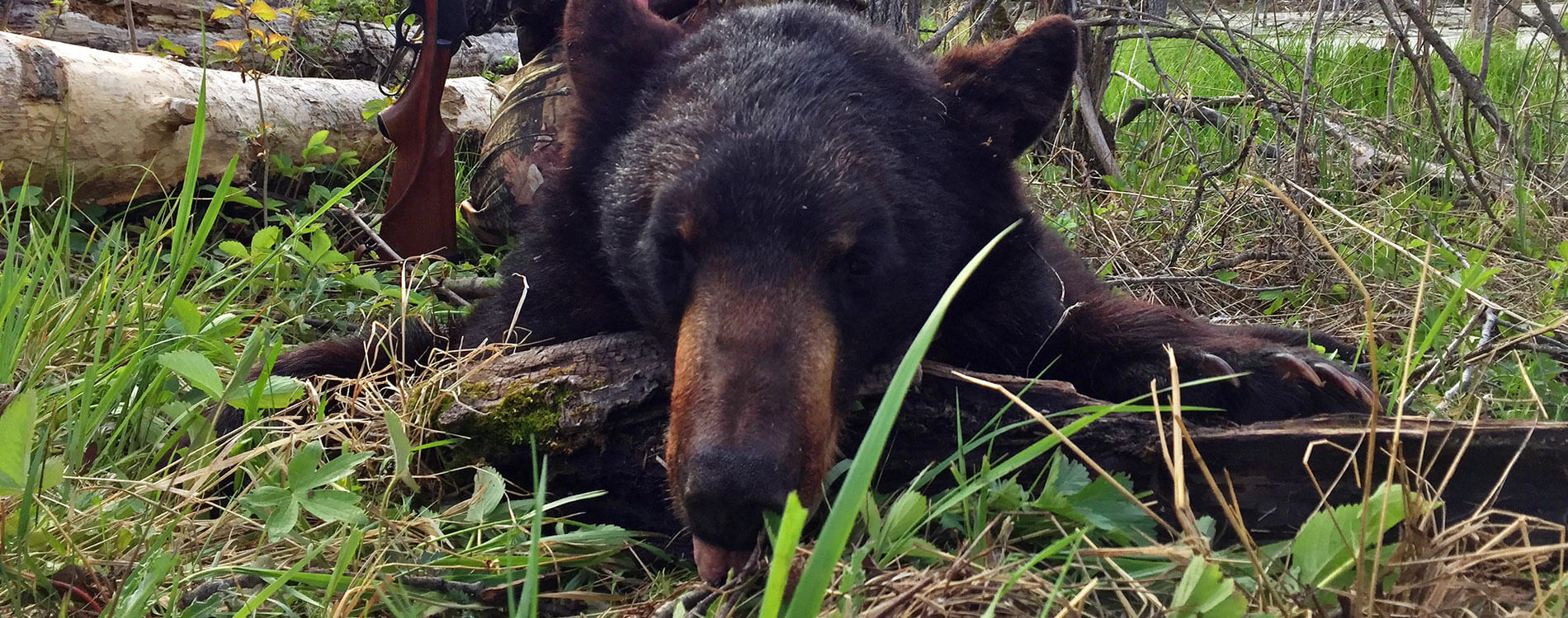 Saskatchewan Waterfowl Hunts - Manitoba Bear Hunts - DOA Outfitters