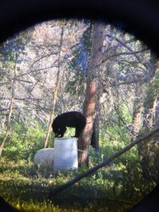 DOA Outfitters - Manitoba Bear Hunts