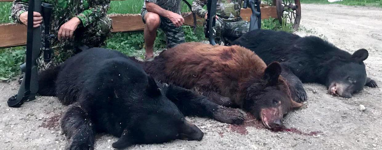 Saskatchewan Waterfowl Hunts - Manitoba Bear Hunts - DOA Outfitters